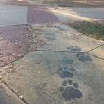 iTowpath Wolf Prints